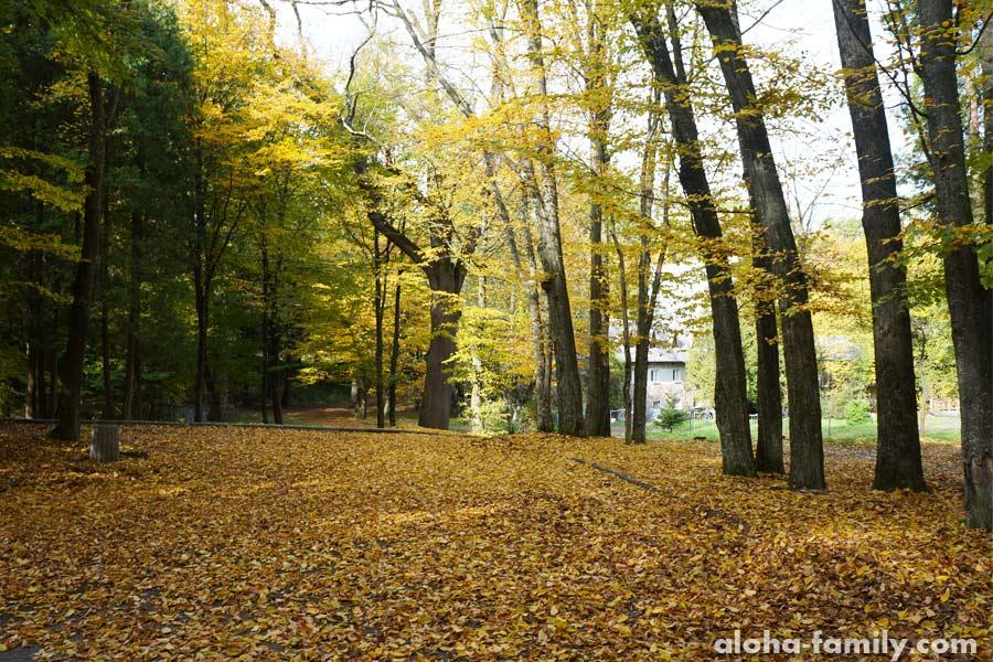 Еще парк Трускавца в октябре