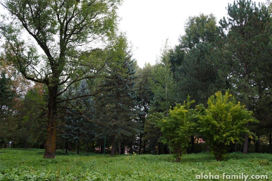 Трускавецкий парк в сентябре