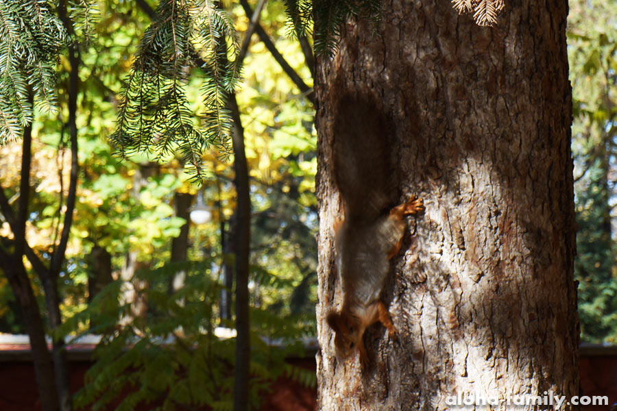 Белочка в парке Франковска