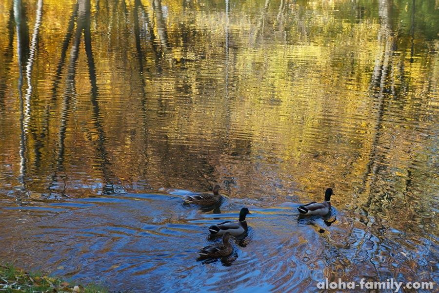 Озерце во франковском парке