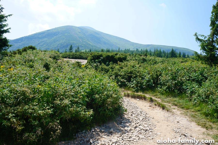 Восхождение на Говерлу - преодолели высоту 1400 метров