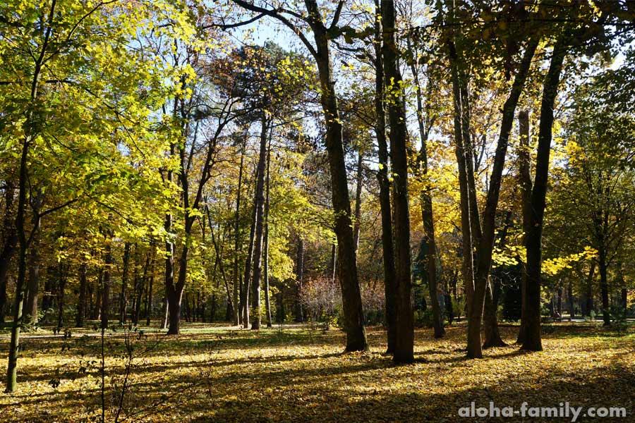 Осенние краски Ивано-Франковска