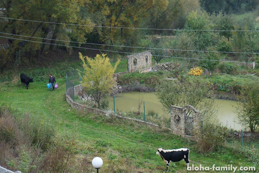 Один раз из спальни даже коров было видно))) Настоящая сельская жизнь!