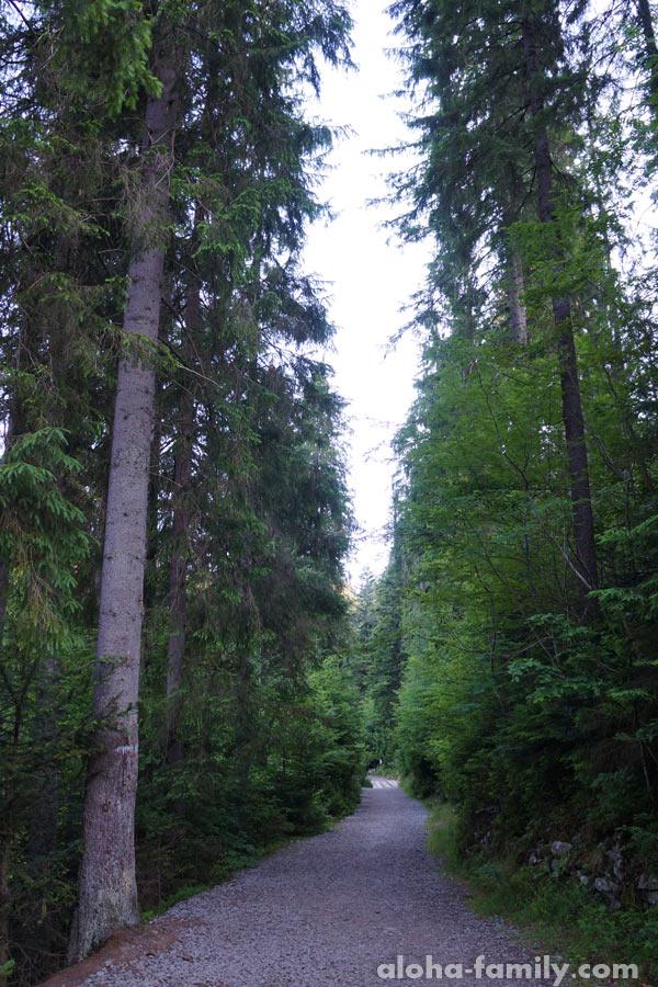 Дорожка вокруг озера Синевир