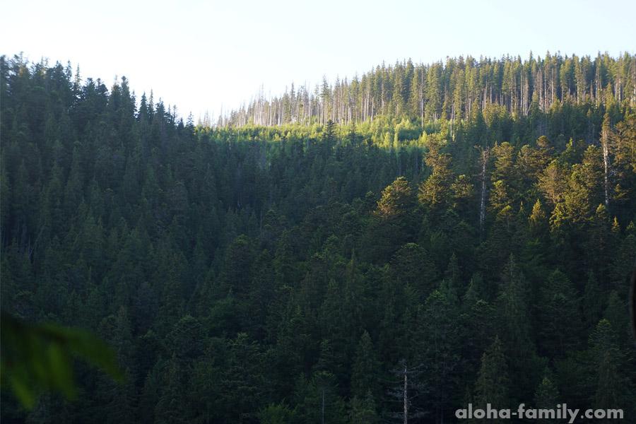 Лес вокруг Синевира шикарен