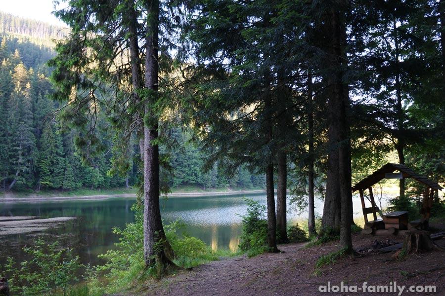 По пути в лесу встречаются лавочки и беседки