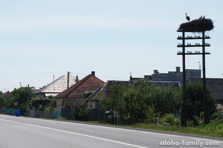 Аисты около дороги Мукачево-Ужгород