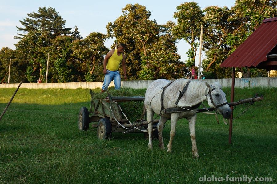 Местный житель и конь у реки в Мукачево