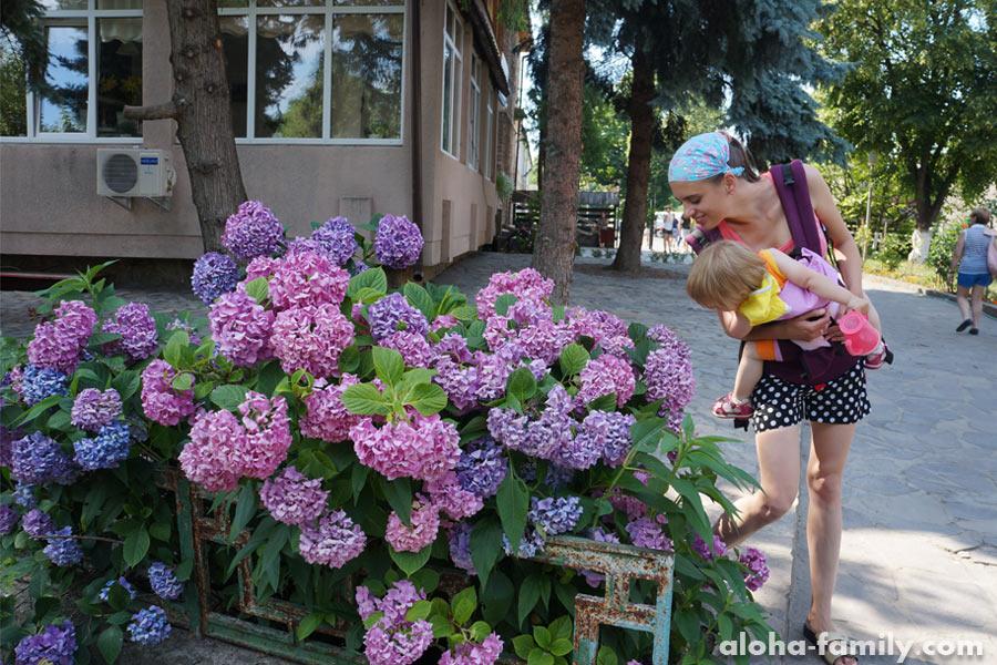 На входе в музей под открытым небом прекрасные июльские цветы