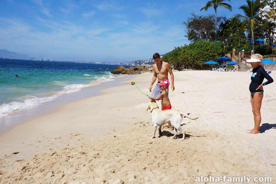 Playa las Gemelas и собака лабрадор
