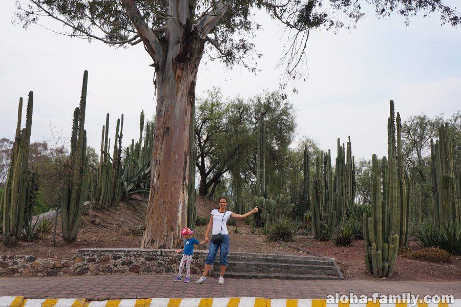 Теотиуакан и высокие кактусы