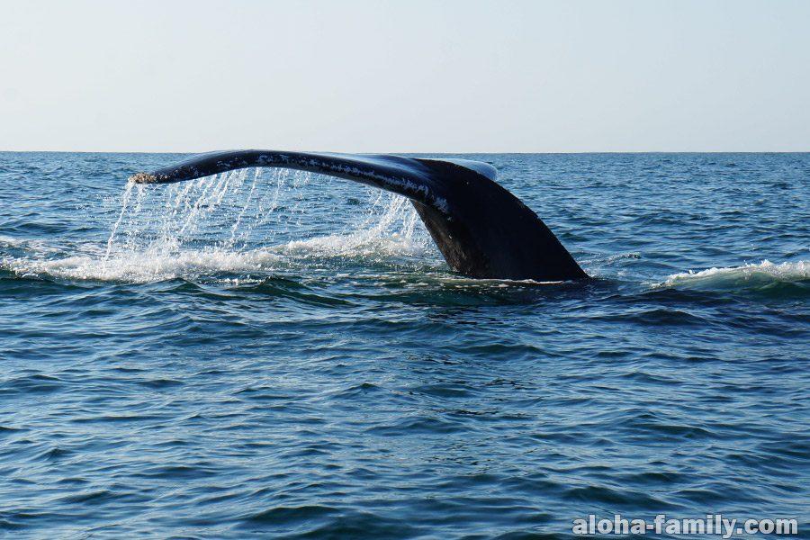 Горбатый кит в Пуэрто Эскондидо